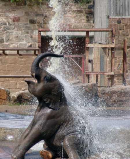 ver elefantes Kenia
